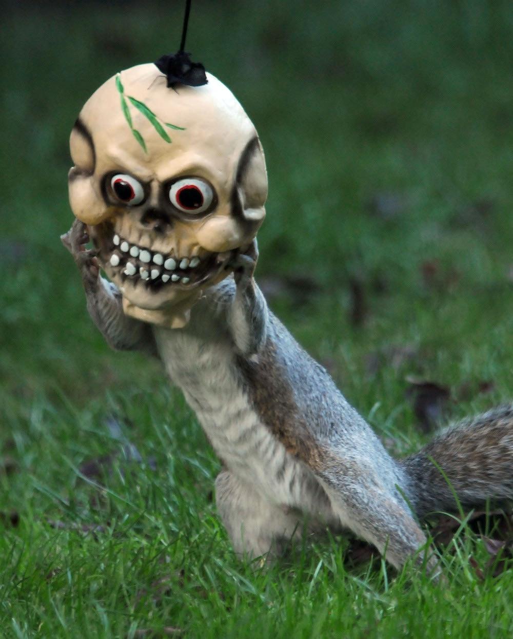 Squirrel Stuck In Halloween Decoration Hallowen Costum Udaf