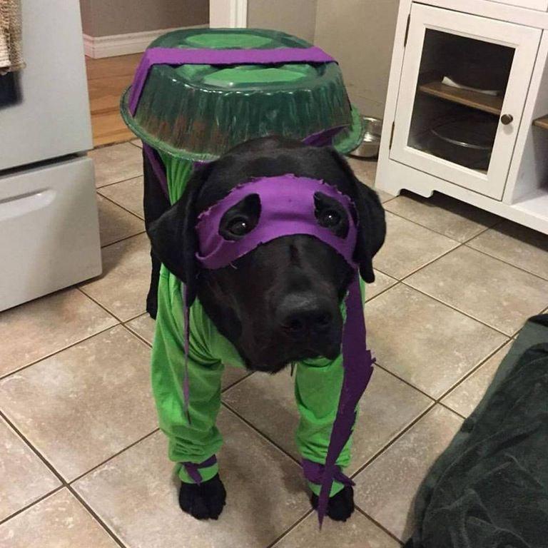 Ninja Turtle Dog Costume Tmnt Pet Halloween Costumes Pet Supplies