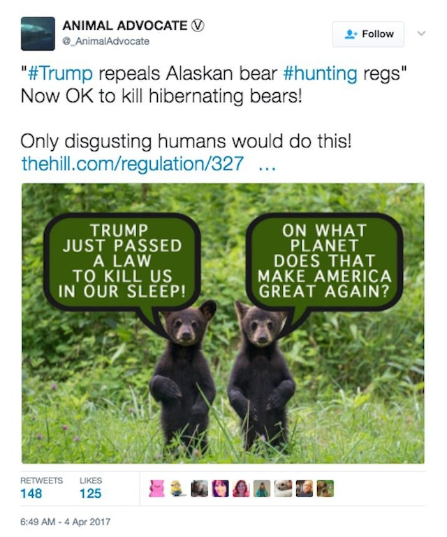 Trump approves hunting of alaskan bears from airplanes for Did congress approve killing hibernating bears