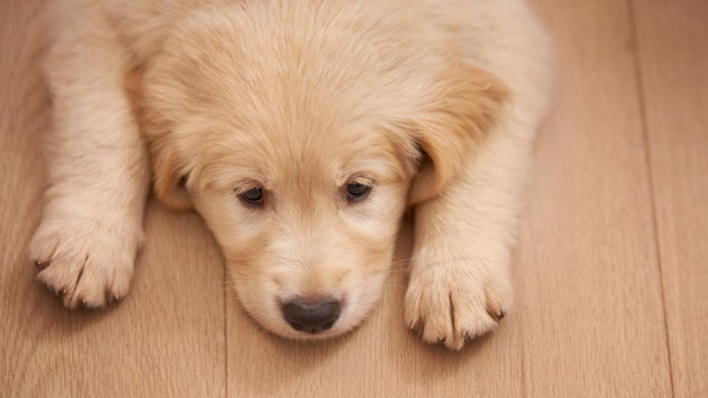 df9f158c sad-puppy-leaves-food-for-dead-dog .jpg?w=1020&h=574&auto=format&q=70&fit=crop&crop=faces