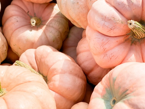 A bunch of pink pumpkins are grouped together.