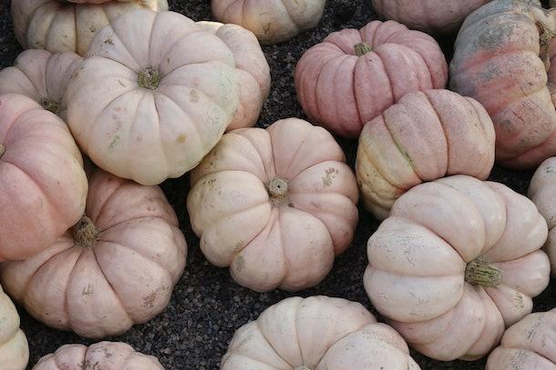 Light pink pumpkins sit in a pile at a farm.