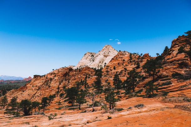 The red rock of Zion National Park is the perfect backdrop for an elopement.
