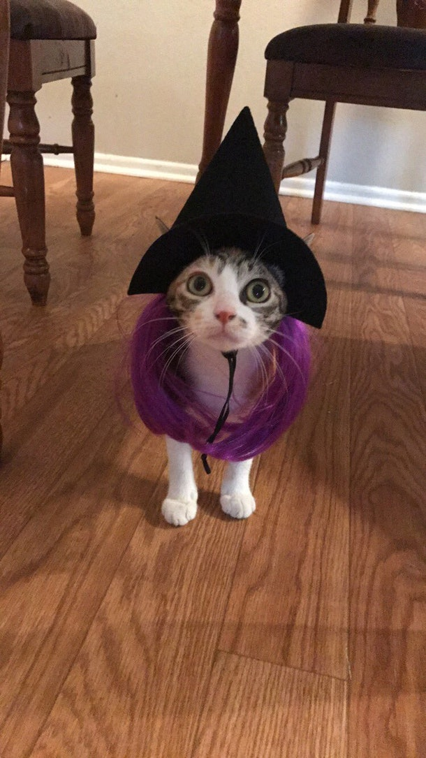 10 Halloween Costumes For Cats That Will Instantly Melt ...