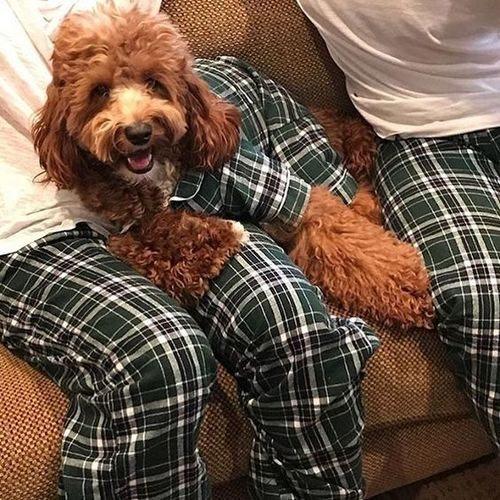 Matching Human And Dog Pajamas