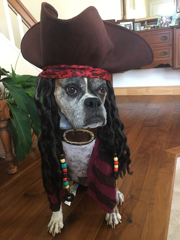 Wag S Dog Halloween Costume Contest Lets You Vote On The