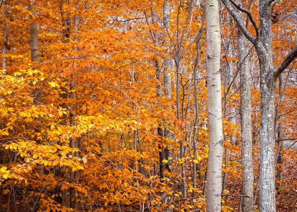 The bright orange fall foliage in Acadia National Park in Maine is perfect for a leaf peeping trip with your SO.