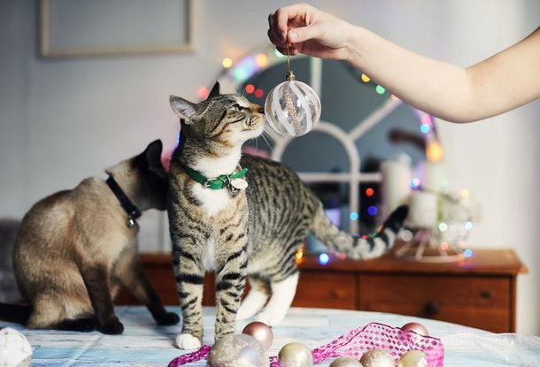 Trader Joe's 2019 Cat Advent Calendar includes a giant fish-shaped treat.