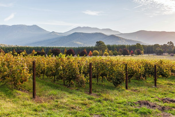 A vineyard in Romania is located near rolling mountains and changing trees.