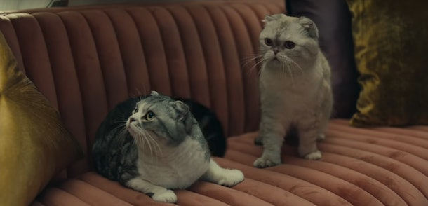 Here Are Facts About Taylor Swift's Cats