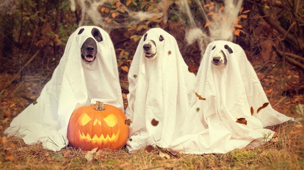 14 Halloween Zoom Backgrounds To Take Your Virtual Parties To The Next Level