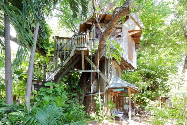 A large treehouse in Miami on Airbnb is surrounded by greenery.