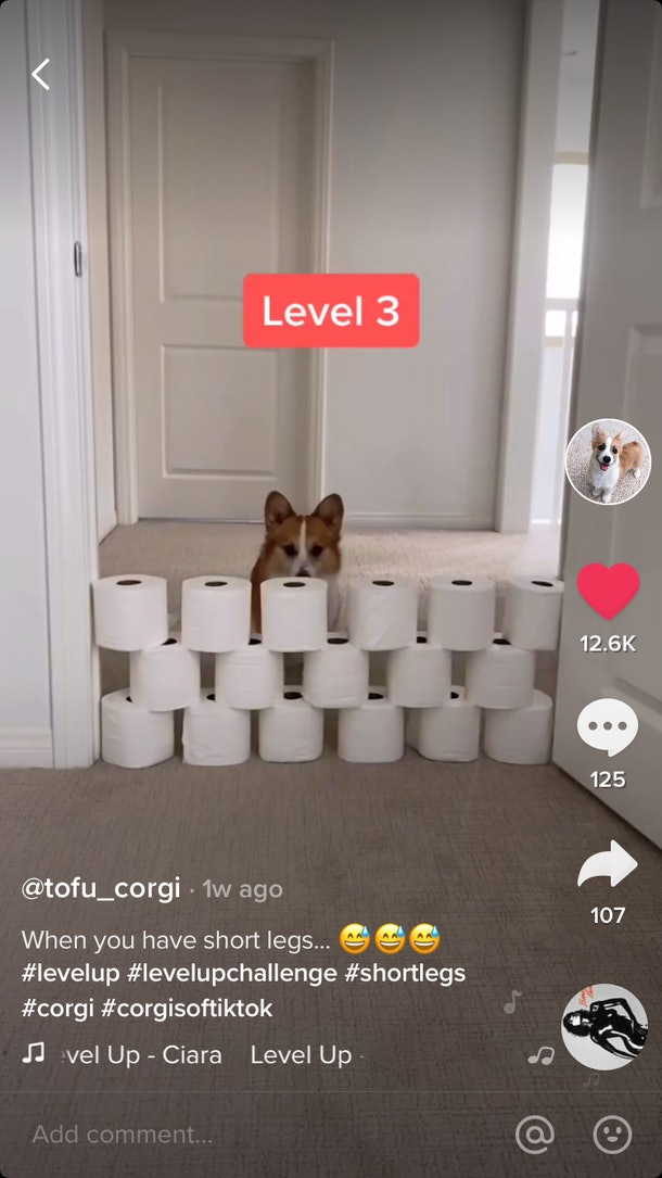 A corgi dog stands behind a wall of toilet paper in a doorway for the #LevelUp TikTok challenge.
