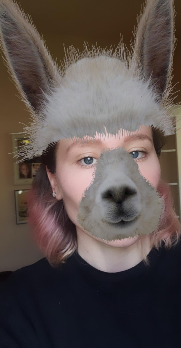 These best animal face filters on Instagram include an adorable llama.