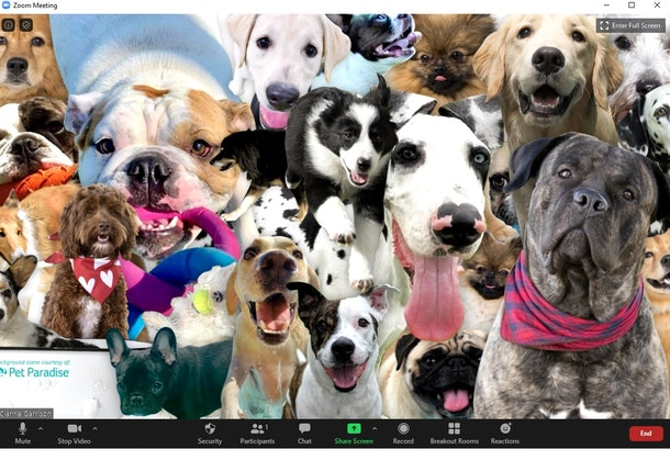 These 18 dog Zoom backgrounds will bring some cuteness to your calls.