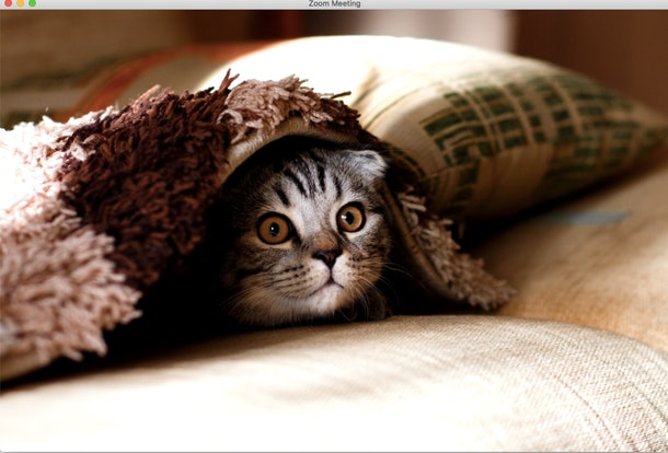 These cat Zoom backgrounds will bring some cuteness to your next meeting.