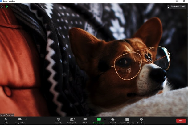 THese 16 funny backgrounds for Zoom feature some laugh-worthy pups.
