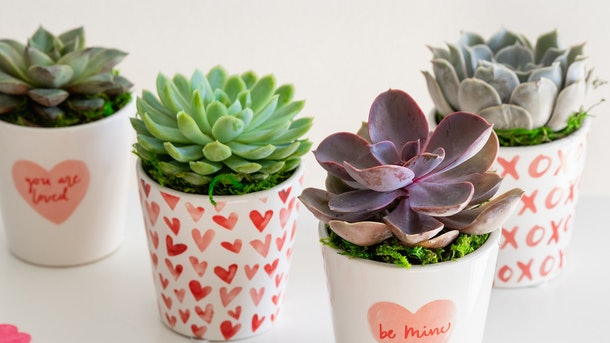 These 16 Galentine's Day Zoom backgrounds include a cute succulent backdrop.