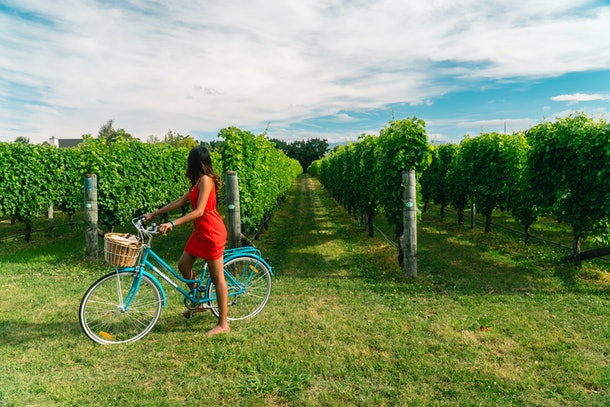 Woman in a red dress riding a bicycle in vineyards. View of grapevines Shot in Blenheim, South Island, New Zealand.