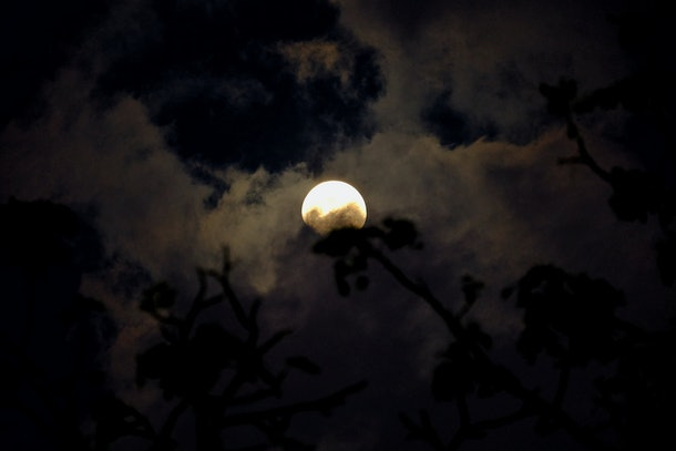 Spooky sky with adead tree branches shadow in the dark night with blur cloudy moonlight
