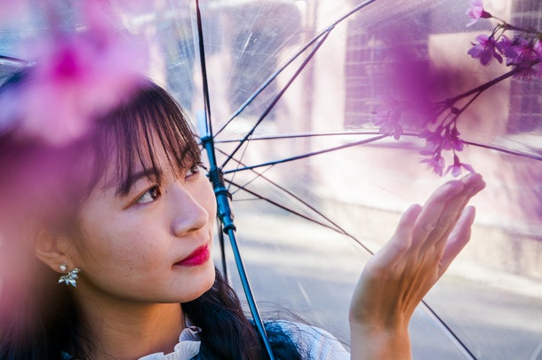 Outdoor portrait of a young Vietnamese girl holding a clear umbrella. She stands under a cherry blossom tree, looking and reaching out to touch a petal of the flower branch above. Blurred background.