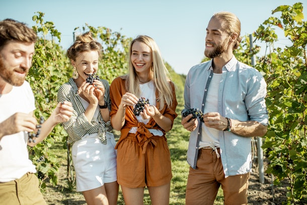 A group of a friends eats grapes on a winery vacation on a sunny day in the summer with grape vines behind them.