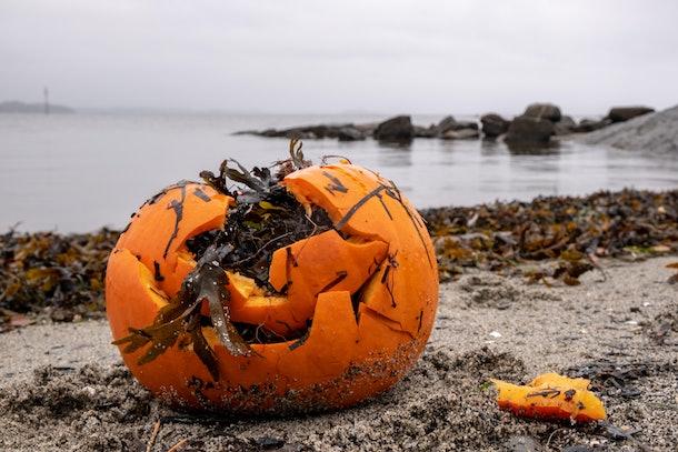 Garbage - broken pumpkin - on the sea shore after Halloween part in Norway