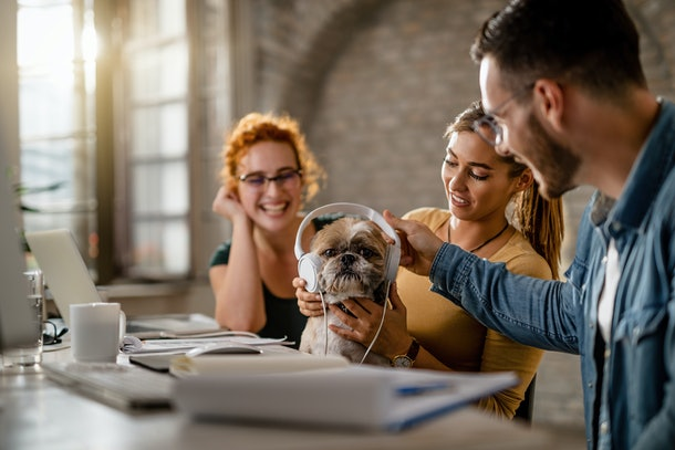 Team of three coworkers have fun while giving headphones to a dog in the office.