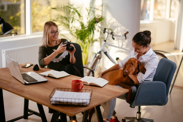 Two women in the office laugh and play with a dog, while one takes a picture of the dog and the other girl.