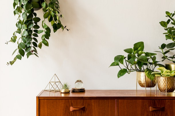 Succulents and plants hang near a wooden dresser in a couple's new apartment.