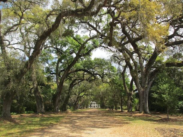Oak Trees leading to a plantation home