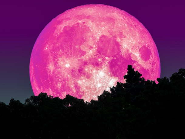 super full pink moon and silhouette tree in forest and star on sky, Elements of this image furnished by NASA