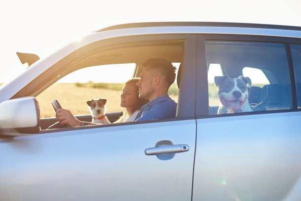 Young couple and their two dogs traveling by car