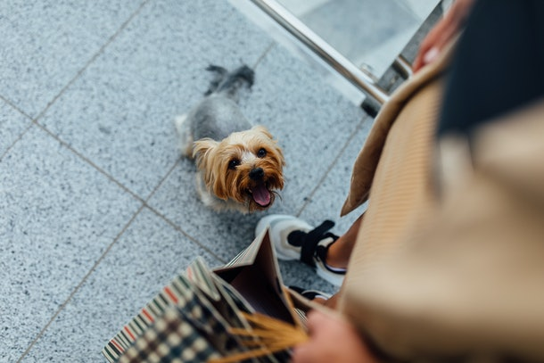 A woman walks in the city with shopping bags with her adorable puppy.