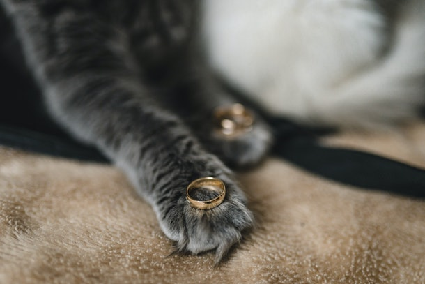 Some of the best at-home proposal stories involve pets.