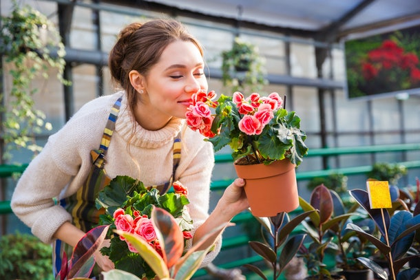 Attractive cute woman gardener smelling pink flowers in pot with eyes closed in greenhouse